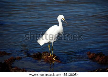 White Egret - stock photo