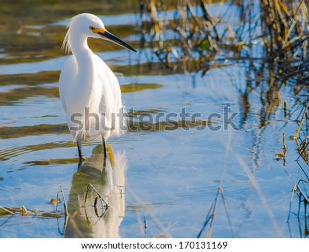 White Egret in its Natural Environment - stock photo