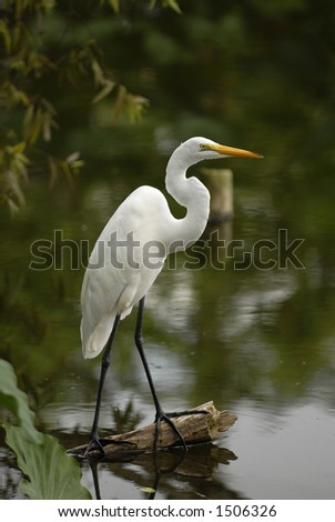 White egret perched on a log overlooking the water