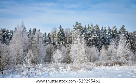 white fairy-tale forest in winter