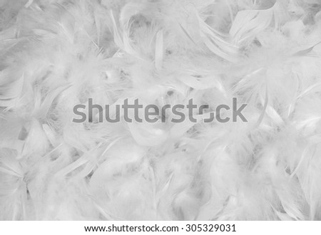 White feather background