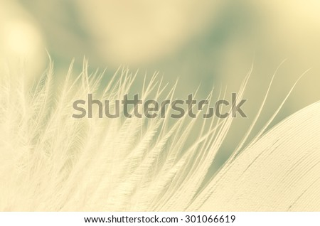 white feather macro on blue background - stock photo