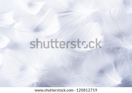 White feather of bird for background image - stock photo