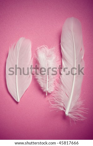 white feather on pink background - stock photo