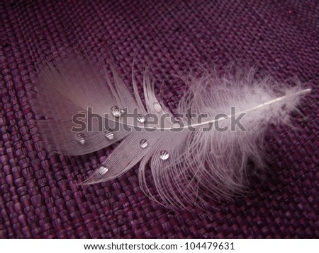 white feather with water drops on violet background - stock photo