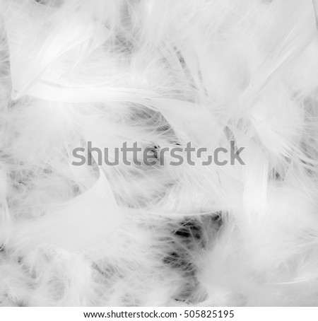 White feathers closeup for background or texture