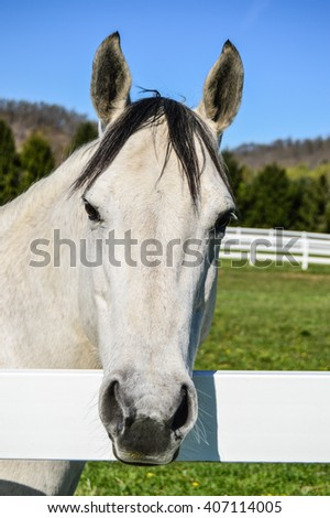 White Female Horse