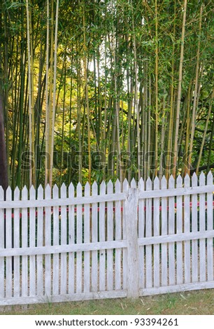 white fence and bamboo forest