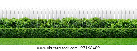 white fence and green hedge on white background - stock photo