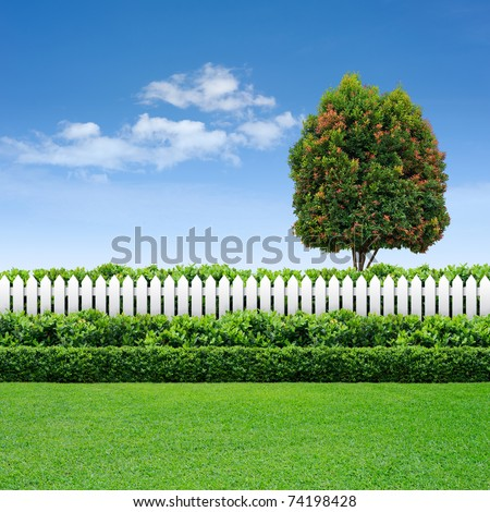 white fence and green hedge with tree on blue sky - stock photo