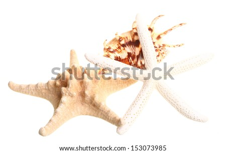 White finger starfish and seashells on white background - stock photo