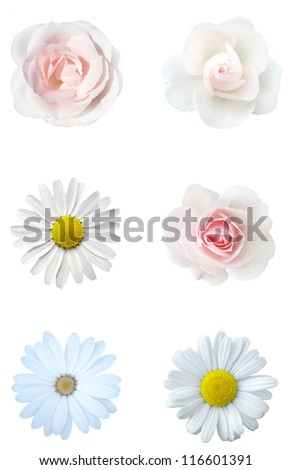white floral collage - stock photo