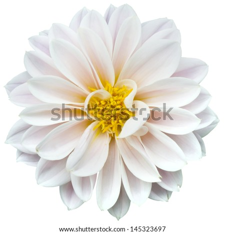 White flower stock photo royalty free 145323697 shutterstock white flower mightylinksfo Gallery
