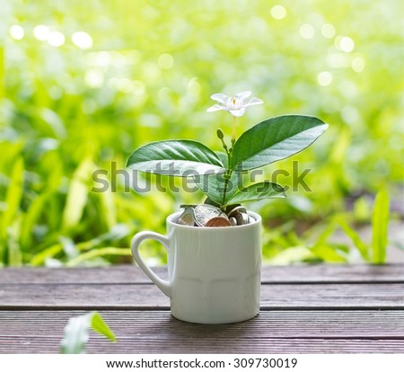 white flower and green plant growing out of coins in white on nature background - stock photo