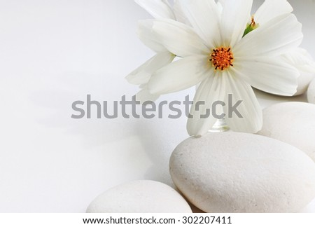 white flower and white pebble stones white background soft focus empty space pretty summery card whiteness - stock photo