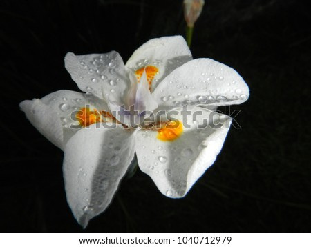 Why night blooming flowers are white images flower decoration ideas unique why night blooming flowers are white image collection awesome why are night blooming flowers white mightylinksfo