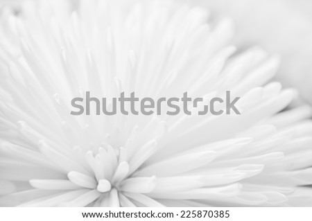 White flower close-up wedding abstract background - stock photo