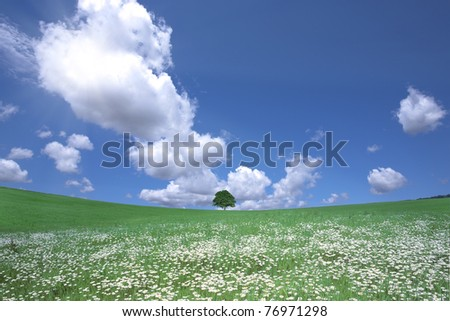 White flower field - stock photo