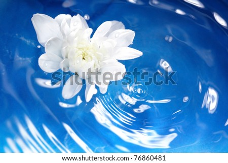 White flower flowing on a blur water. Shallow depth of field added by macro lens for natural view. - stock photo