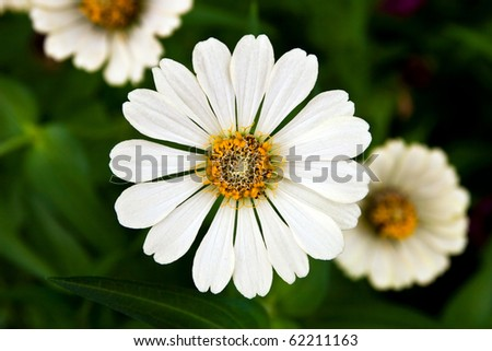 white flower in garden - stock photo