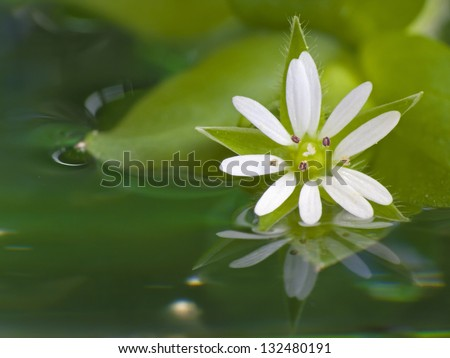 White flower in water - stock photo