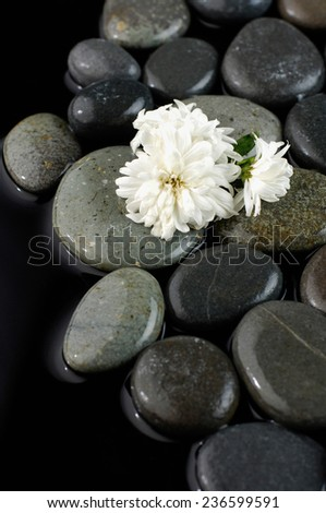 White flower isolated on pebbles
