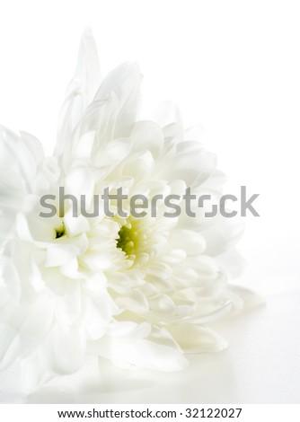White Flower Isolated on White Background - stock photo