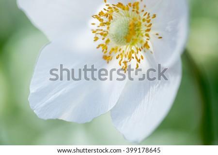 White flower. Macro shoot. Selective shallow focus - stock photo