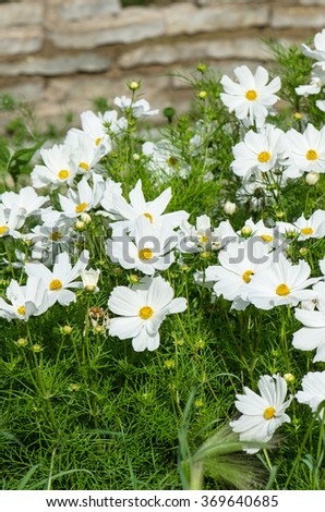 White  flower on a bed with other plants, close-up - stock photo