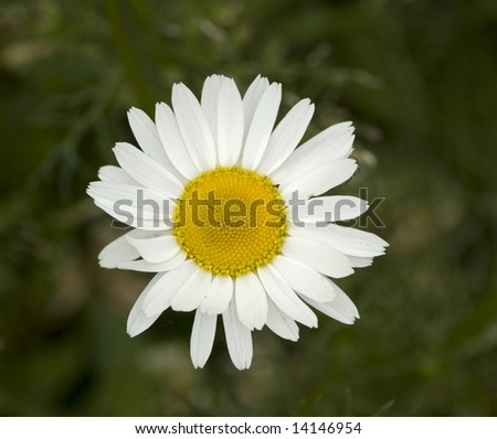 White flower on green background