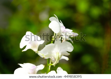 white flower on green leaf blurry background,select focus with shallow depth of field:ideal use for background.