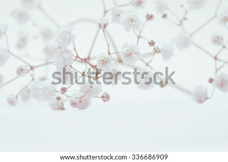 White flower on light background. Soft focus. Vintage retro style. - stock photo