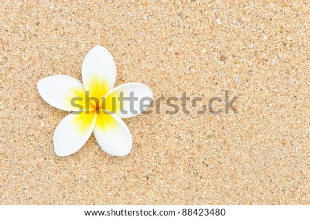 white flower on sand beach - stock photo