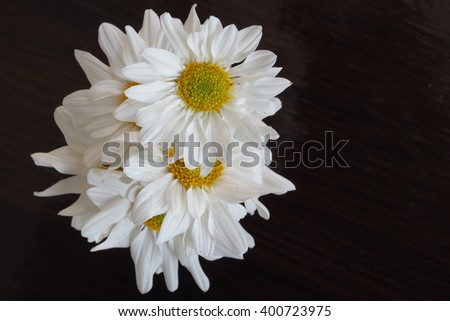 White Flower on the Table, Selective Focus