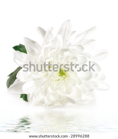 White Flower with Green Leaf Isolated on White Background - stock photo