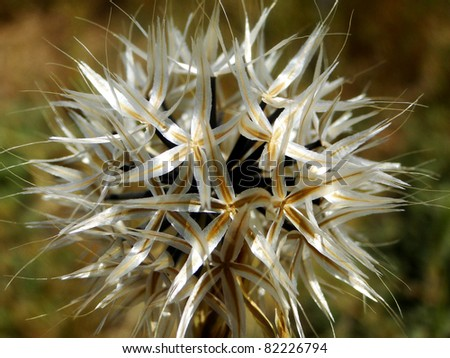 White Flower with Star Shaped Petals - stock photo