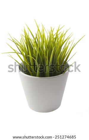 White flowerpot with beautiful and fresh green plant. - stock photo