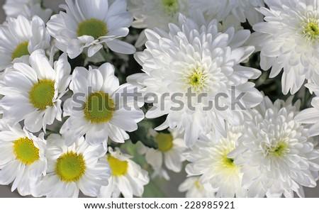 white flowers - stock photo