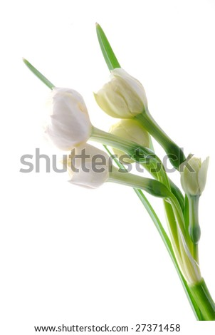 white flowers against white background - stock photo