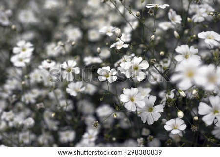 White flowers all over with blurred background - stock photo