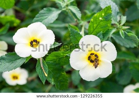 white flowers and bee - stock photo