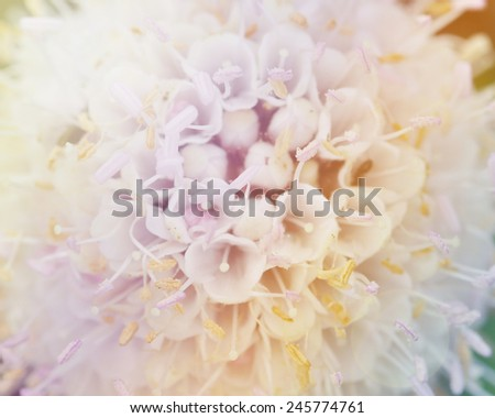 white Flowers and Vintage color