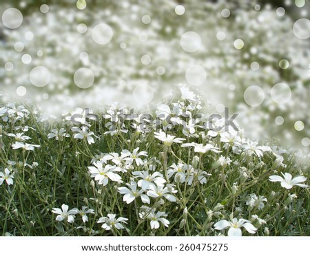 White flowers bokeh - stock photo
