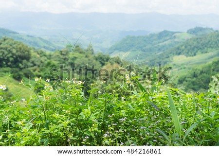 White flowers bush in front below with mountain and blue sky in back.