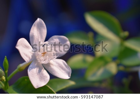 White flowers called tip serpen whit stock photo royalty free white flowers called tip serpen whit green leaf mightylinksfo