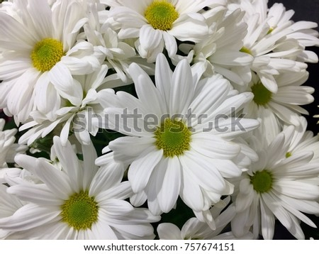 White flowers can mean reverence humility stock photo royalty free white flowers can mean reverence and humility purity and innocence or sympathy for a bereavement mightylinksfo
