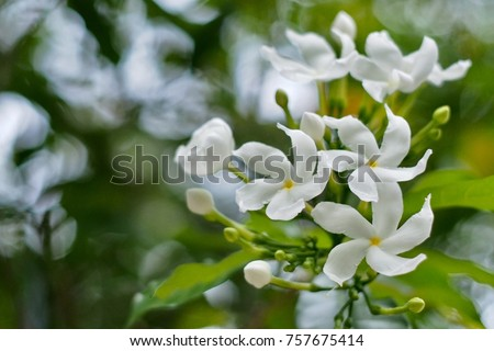 White flowers can mean reverence humility stock photo 757675414 white flowers can mean reverence and humility purity and innocence or sympathy for a bereavement mightylinksfo