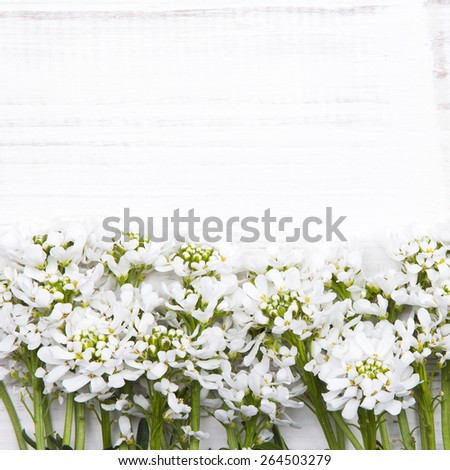 white flowers frame on white wooden background - stock photo