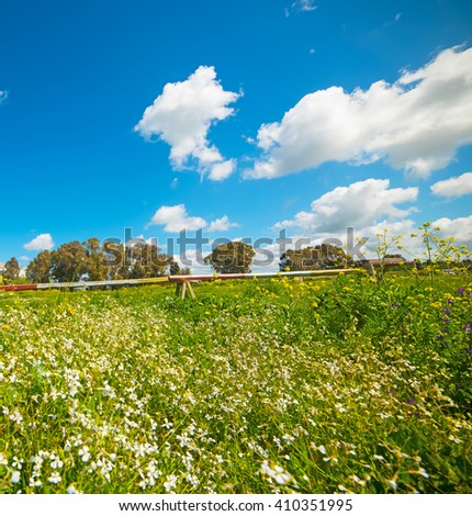 white flowers in a green field under a blue sky - stock photo