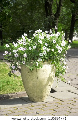 white flowers in a large vase in the garden - stock photo